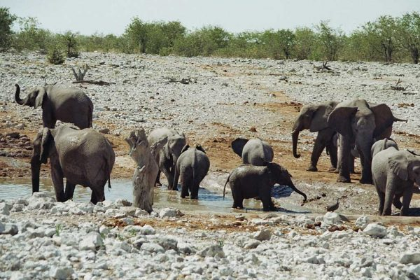 img_namibia-tour-elefanten